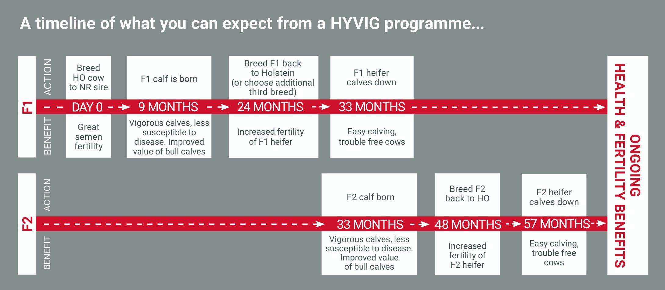 hyvig-timeline