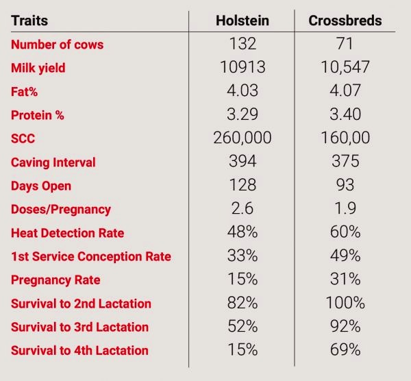 output-systems-traits-table-holsteins-crossbreds