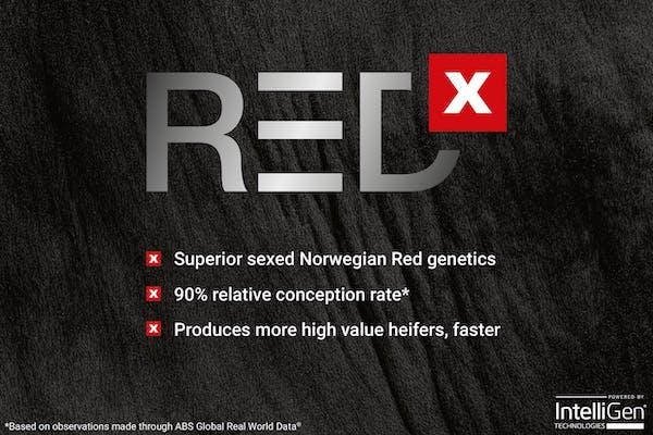 REDX™ - Superior Sexed Norwegian Red Genetics - Hyvig