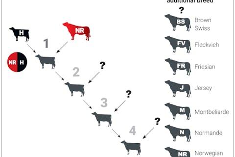 hyvig-three-way-cross-diagram
